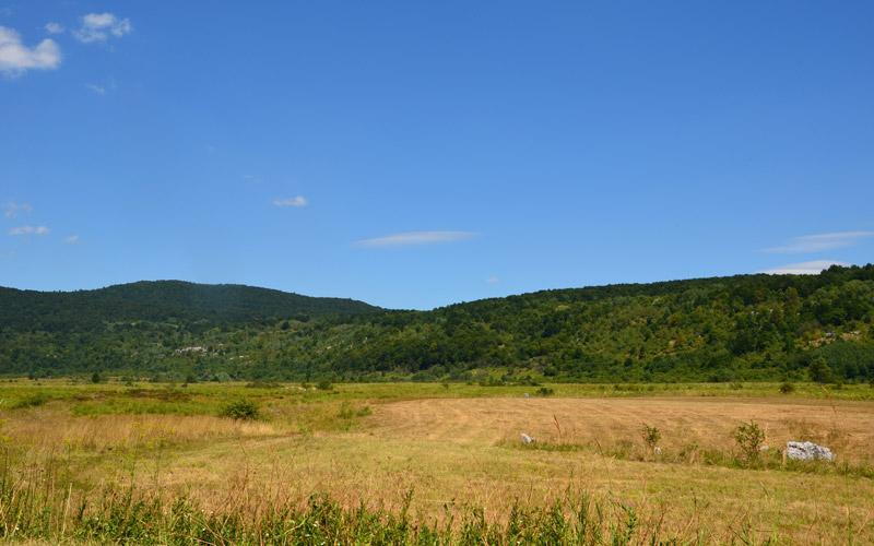 Brezovačko polje