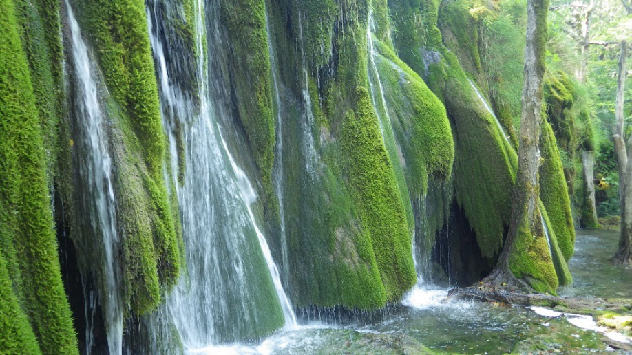 Sedrene barijere Gornjih jezera obrasle mahovinom Palustriella commutata (foto: Antun Alegro)