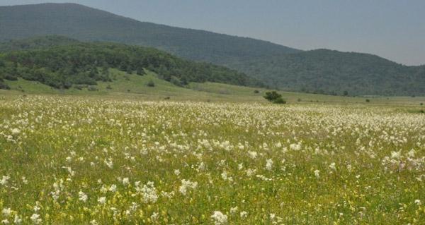 Figure 4 – Dry continental grasslands (Festuco-Brometalia)