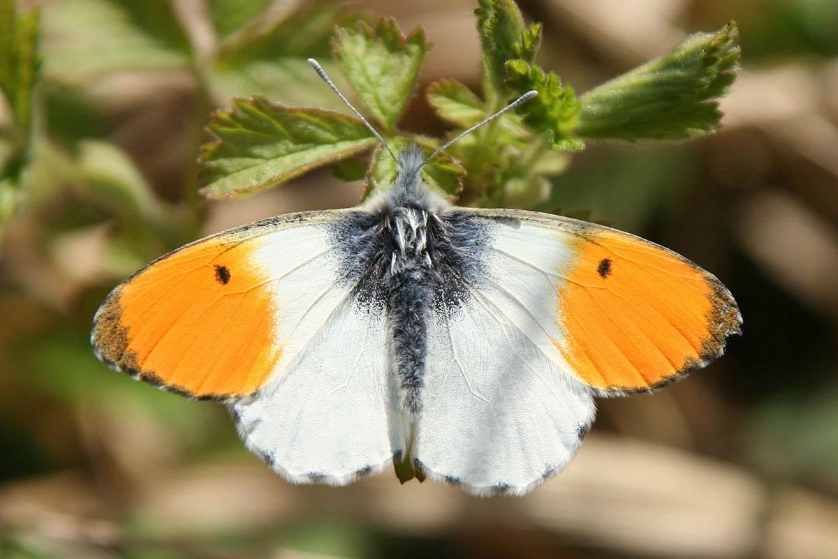 aplikacija za upoznavanje leptira